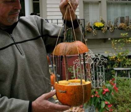 feeder make animals bottle bird pumpkin pets