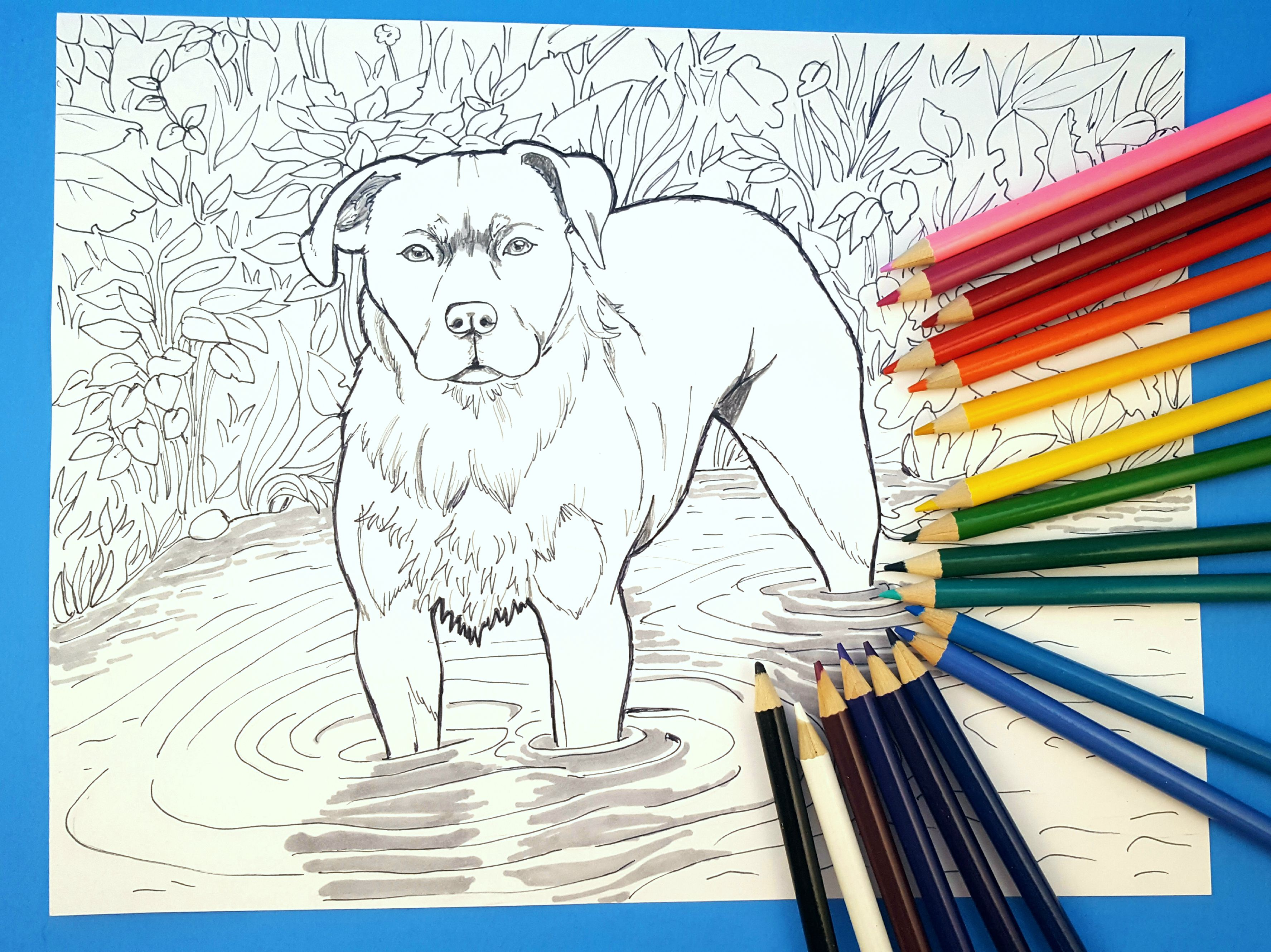 dogs illustration pups coloringbook coloringpage coloring digital printable book page pages download coloringpages drawing art