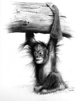 manual art draw monkey pencil
