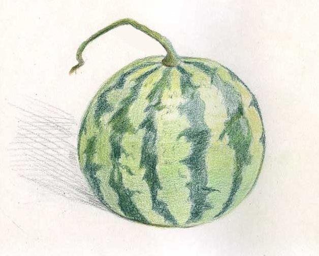art colored pencils watermelon draw