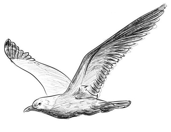 you can distinguish long feathers on the second wing refine the feathers around the head and on the body to draw shadows properly consult the original