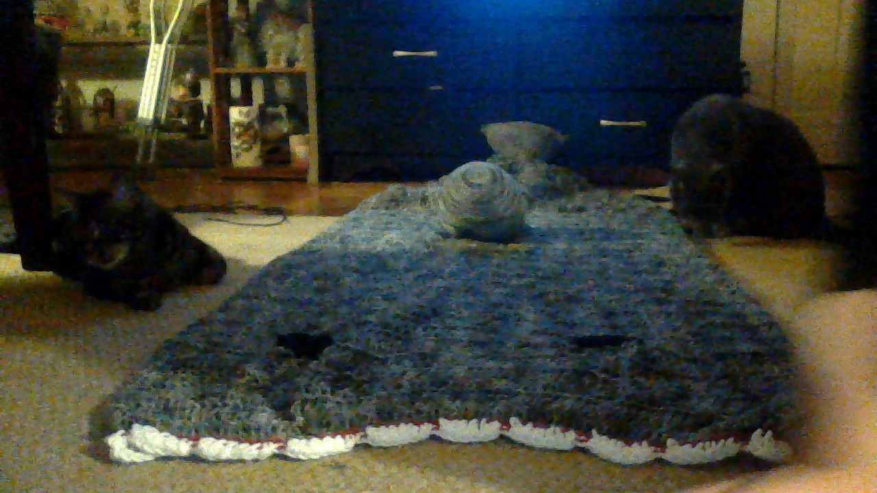 blanket shark