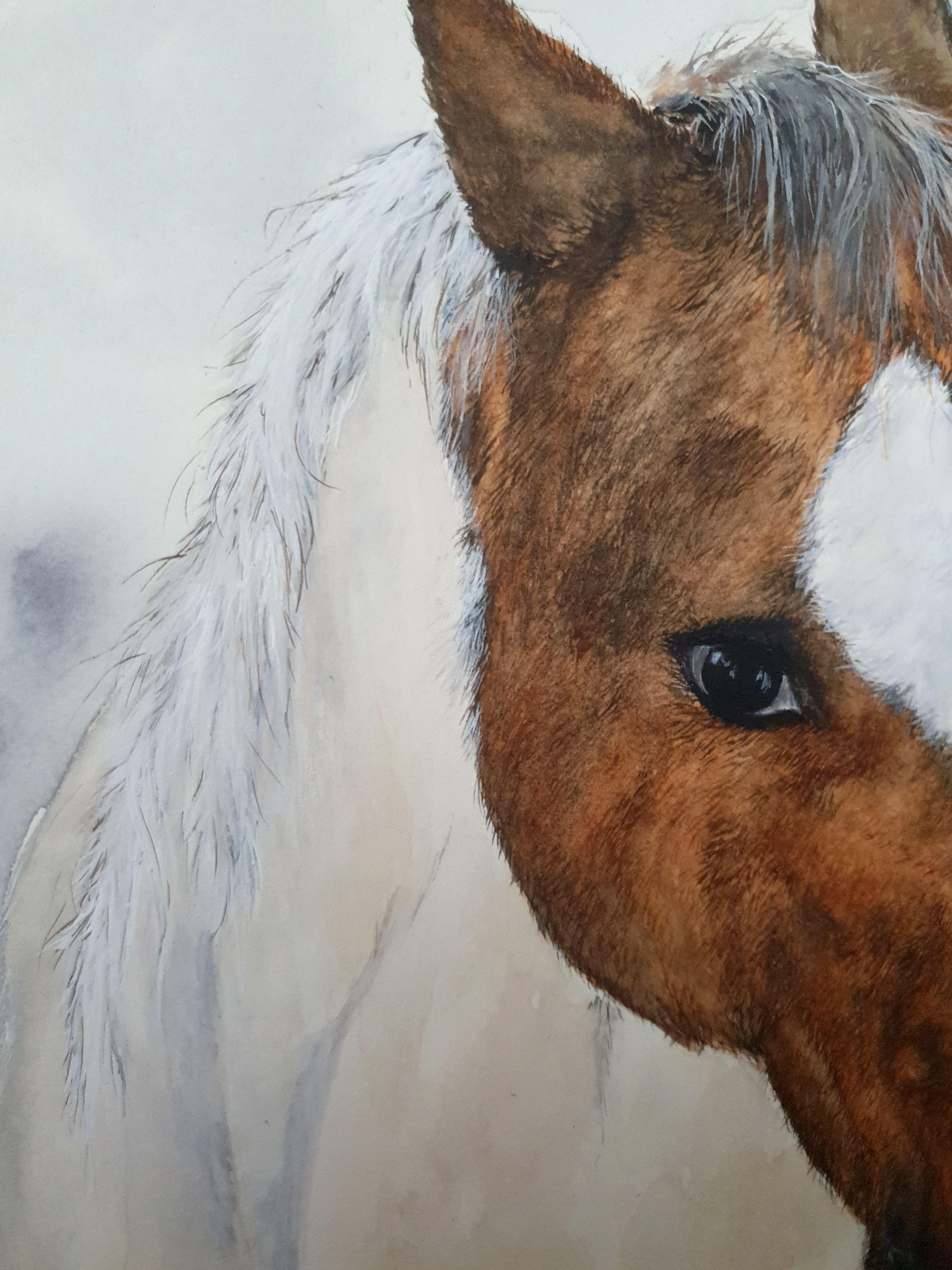 decor wall house home watercolor animal horse painting art