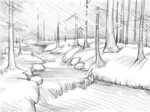 pine draw forest pencil shadows art