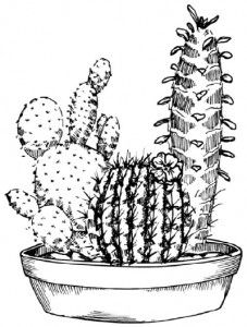 pictures shades cactus draw pencil art