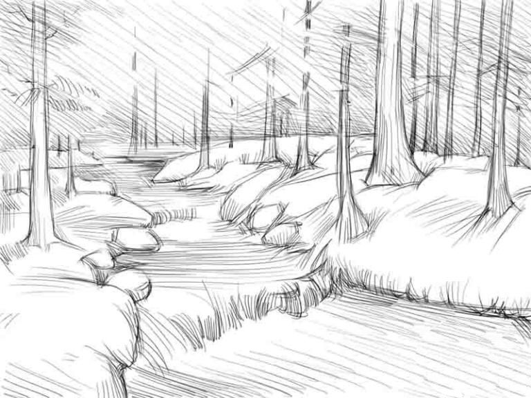 shadows art pencil pine forest draw