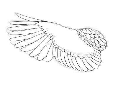 step bird wings draw art