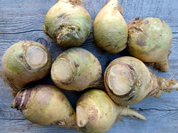 cookery rutabaga cook instructions ingredients recipe