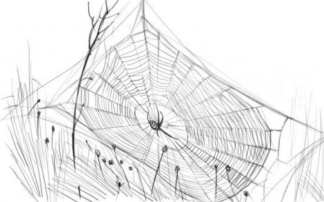 web art pencil spider draw