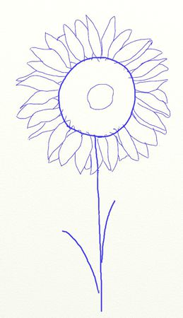 colors proportions sunflower draw art