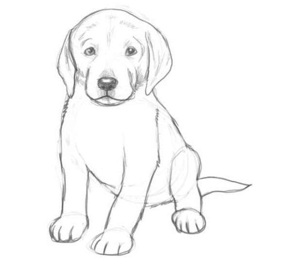 dogs line draw pencil art