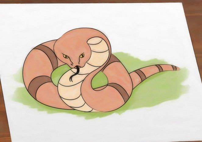 colour art snake traditional draw