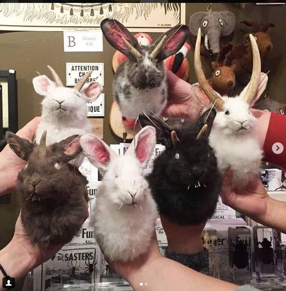 workshop rabbit mount