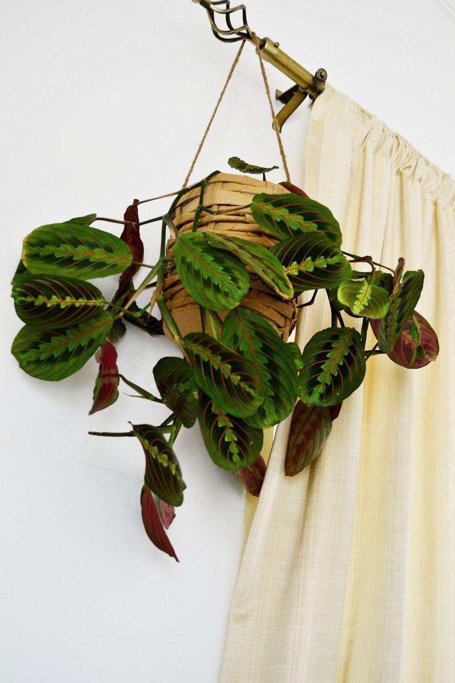 paperpot housedecoration plants paperdecoration idea paperbag creative decor interior diy pot