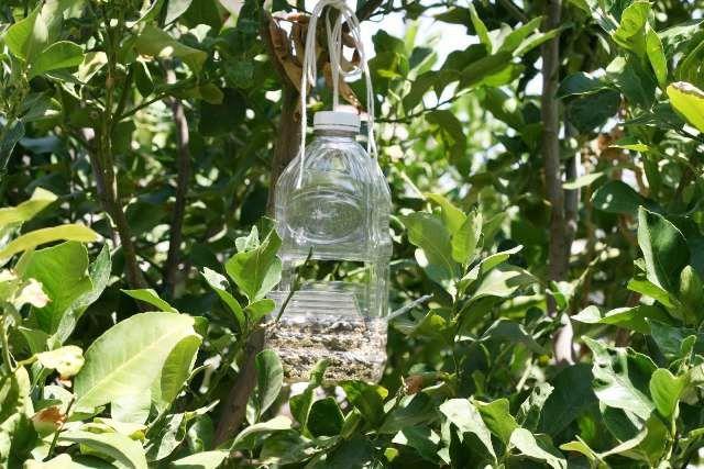 feeder pets animals bird make pumpkin bottle