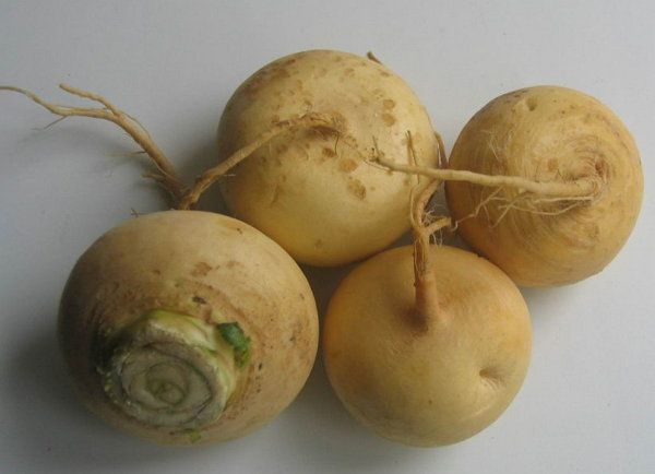 cookery turnips cook ingredients recipe
