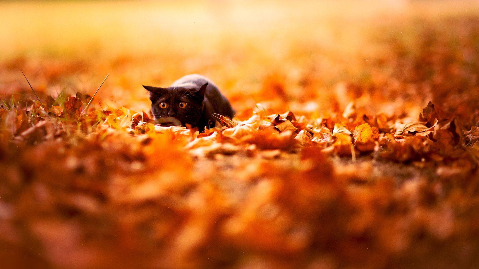 lifestyle autumn inspiration motivation