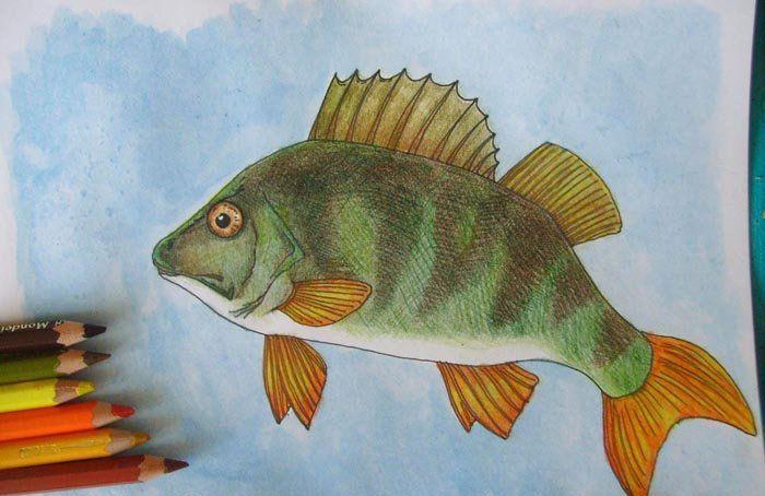 art fish pencil colors draw