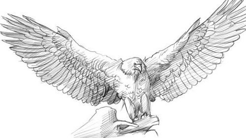 eagle contour art paint bird pencil draw