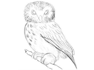 how to draw an owl Wolf Pencil Drawings owl draw pencil shadows art