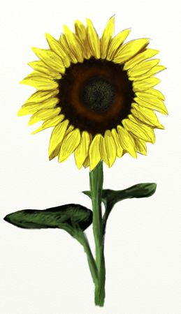 how to draw girl with sunflower