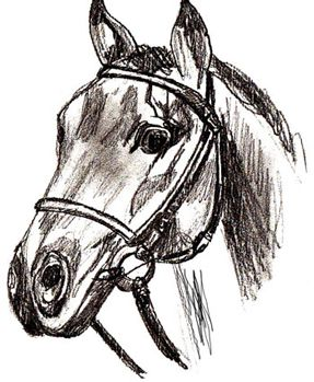 art horse pencil head draw