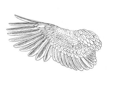 art step bird wings draw