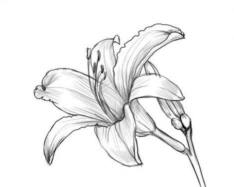flower art picture pencil draw