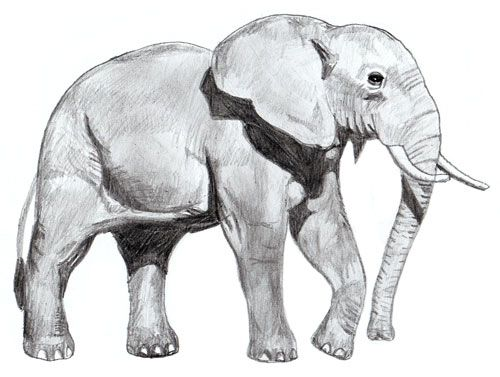 step shadows art elephant pencil draw