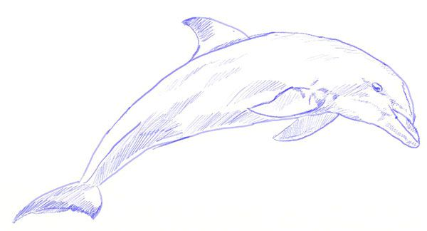 color dolphin draw pencil art