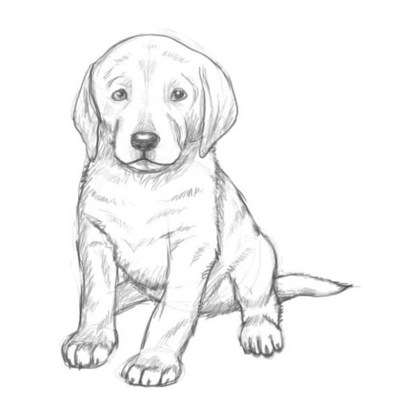 puppy drawing. How To Draw A Puppy  Drawing Easy Cute Step By St