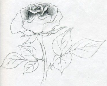 roses draw flower pencil art