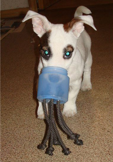 make animals dog toys pets