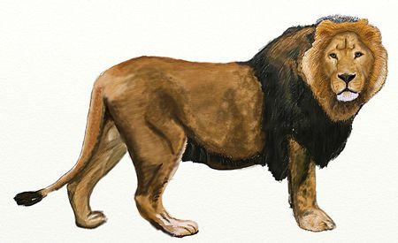 art colorful pencil lion draw