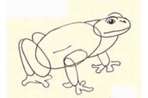 color instruction frog stepbystep draw pencil