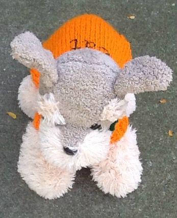 sweater petite dog
