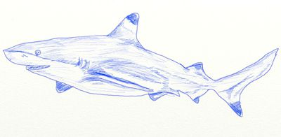 coloring contours sharks draw art