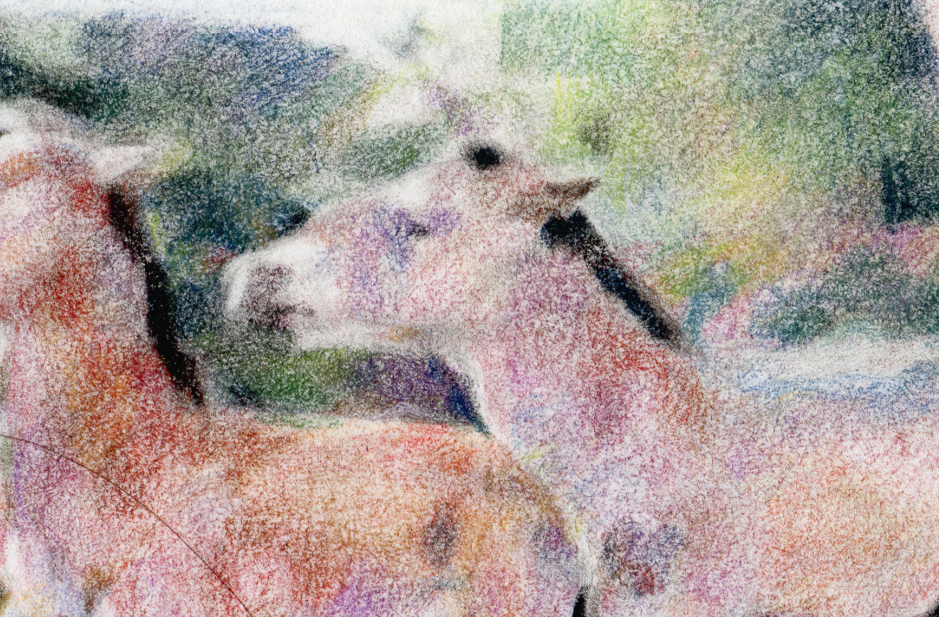 baby art soft illustration picture pastel dry original horses drawing visual peaceful rainbow positive child nursary foal