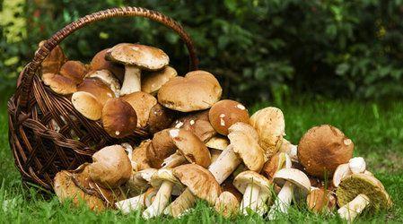 recipe chicken mushrooms pasta idea diy delicious cooking cookityourself dinner autumnrecipes creamypasta