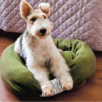 bed pets dog animals make