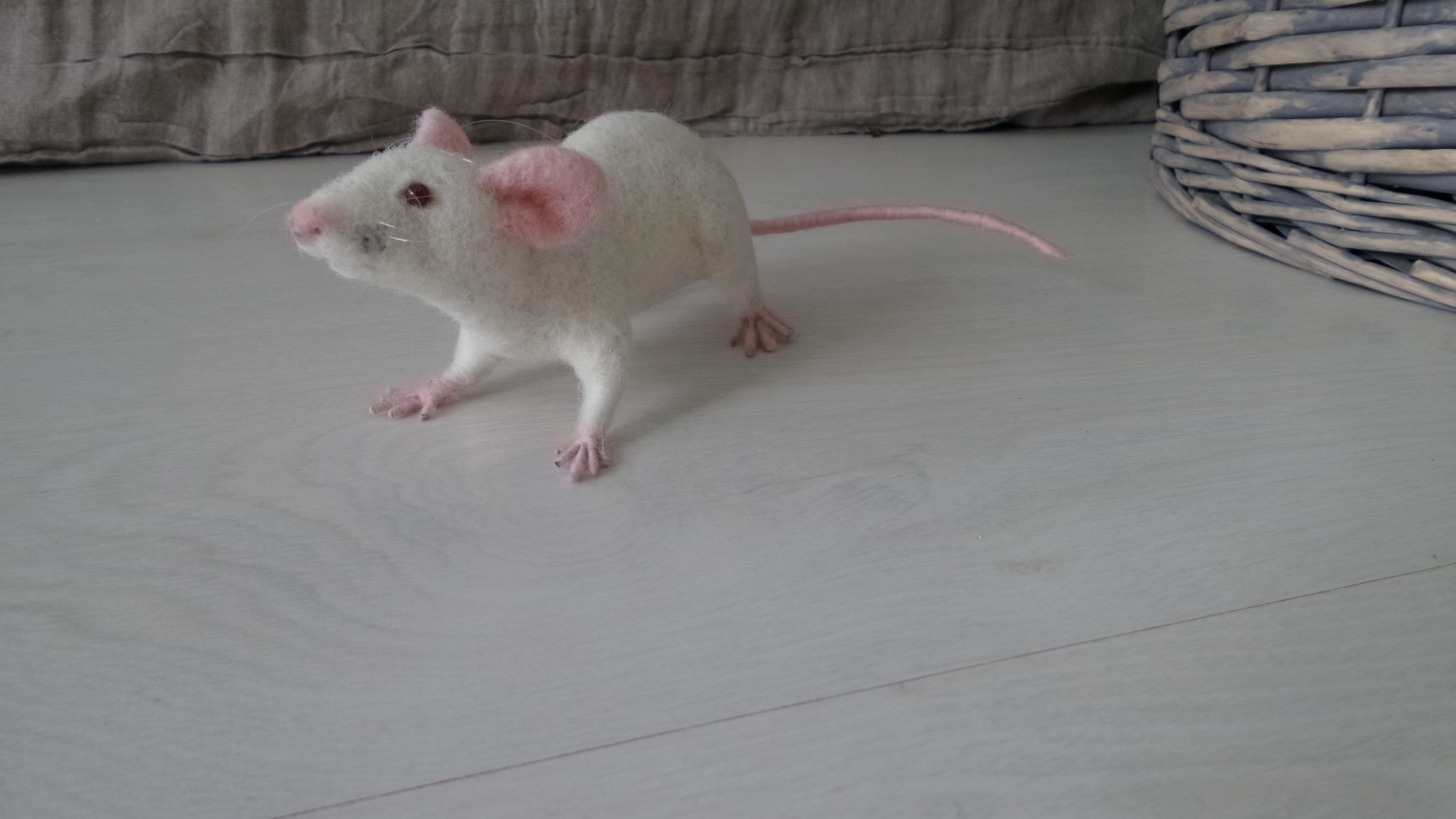 laboratoryrat domesticrats whiterat feltedmouse sciencegift albinoanimals ratlossgifts ratportrait stuffedrat ratlover