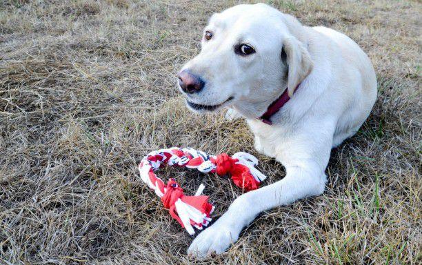 pets diy dog animals toys ideas