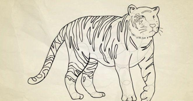 color basic tiger shapes draw art