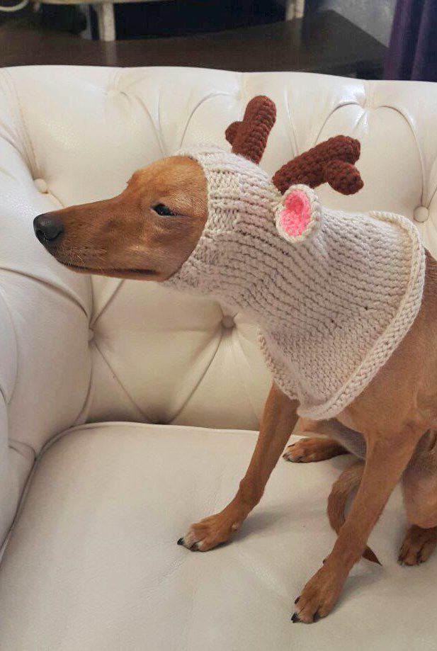 hat dog white deer knitting