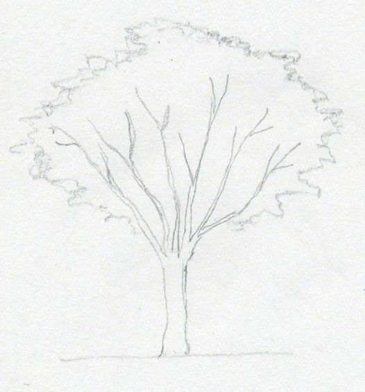 instruction tree draw pencil art