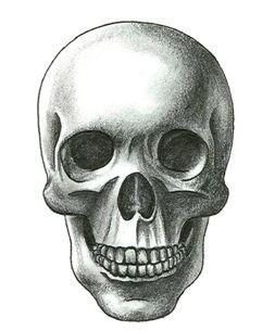 skull human draw pencil art