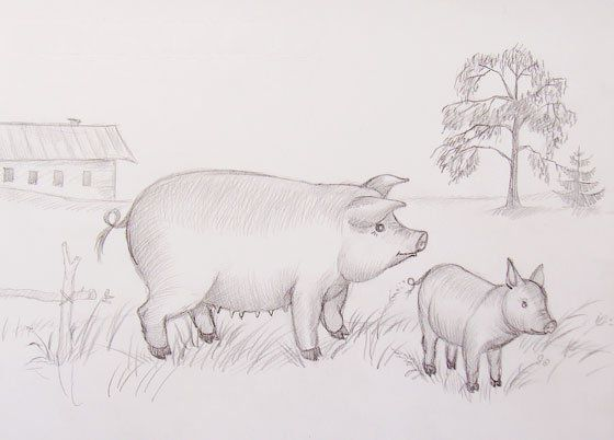 art picture pencil pig draw