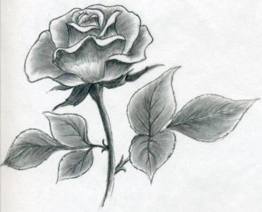 flower art roses pencil draw