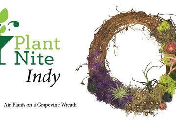 Air Plants on a Grapevine Wreath