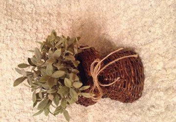 """A small planter """"Magic paper"""""""